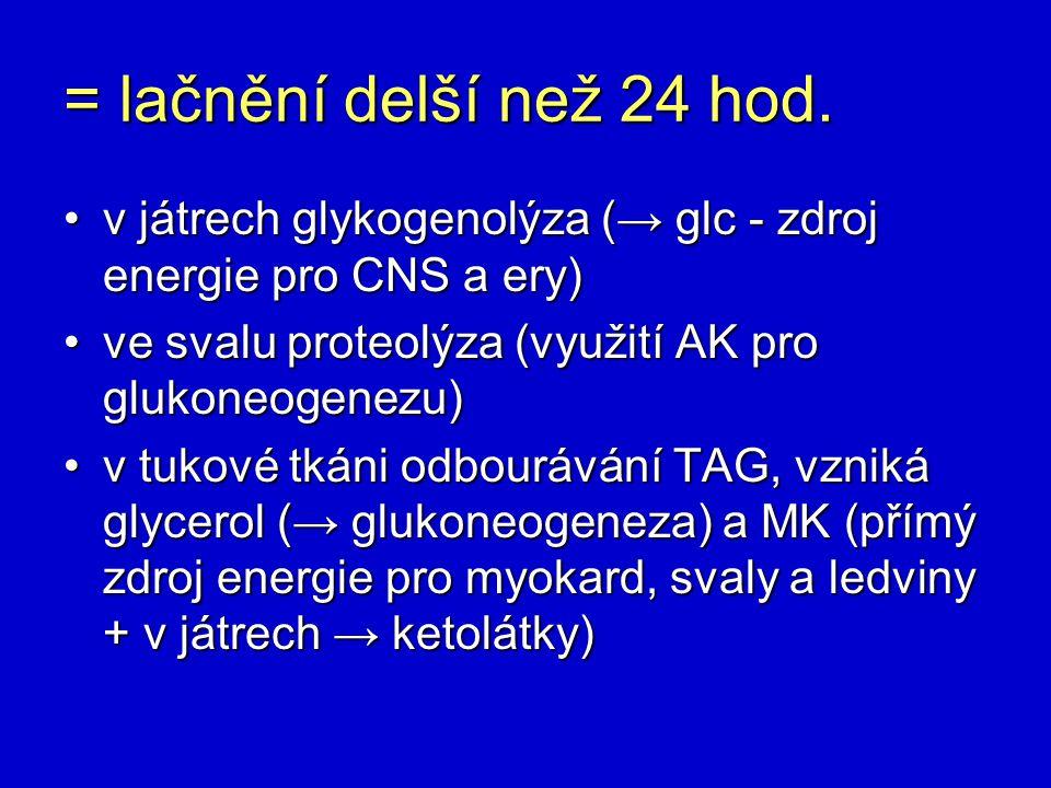 = lačnění delší než 24 hod. v játrech glykogenolýza (→ glc - zdroj energie pro CNS a ery) ve svalu proteolýza (využití AK pro glukoneogenezu)