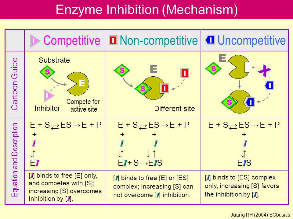 Enzyme Inhibition (Mechanism)