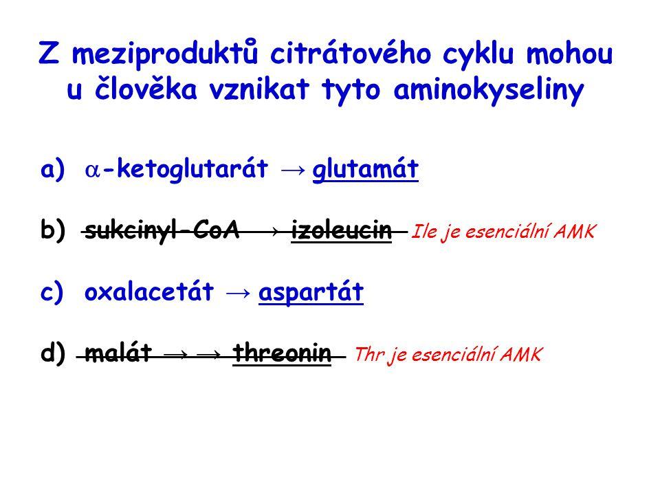 Z meziproduktů citrátového cyklu mohou u člověka vznikat tyto aminokyseliny