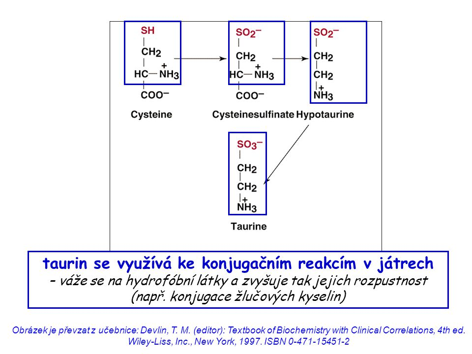 taurin se využívá ke konjugačním reakcím v játrech – váže se na hydrofóbní látky a zvyšuje tak jejich rozpustnost (např. konjugace žlučových kyselin)