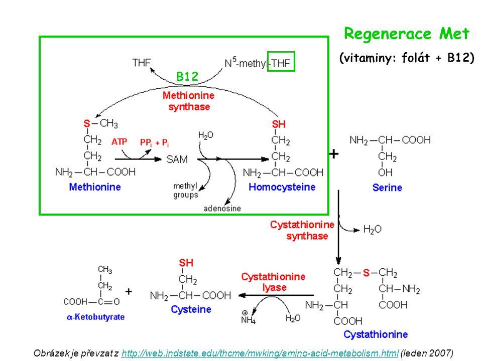 Regenerace Met (vitaminy: folát + B12) B12
