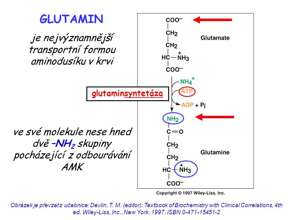 je nejvýznamnější transportní formou aminodusíku v krvi