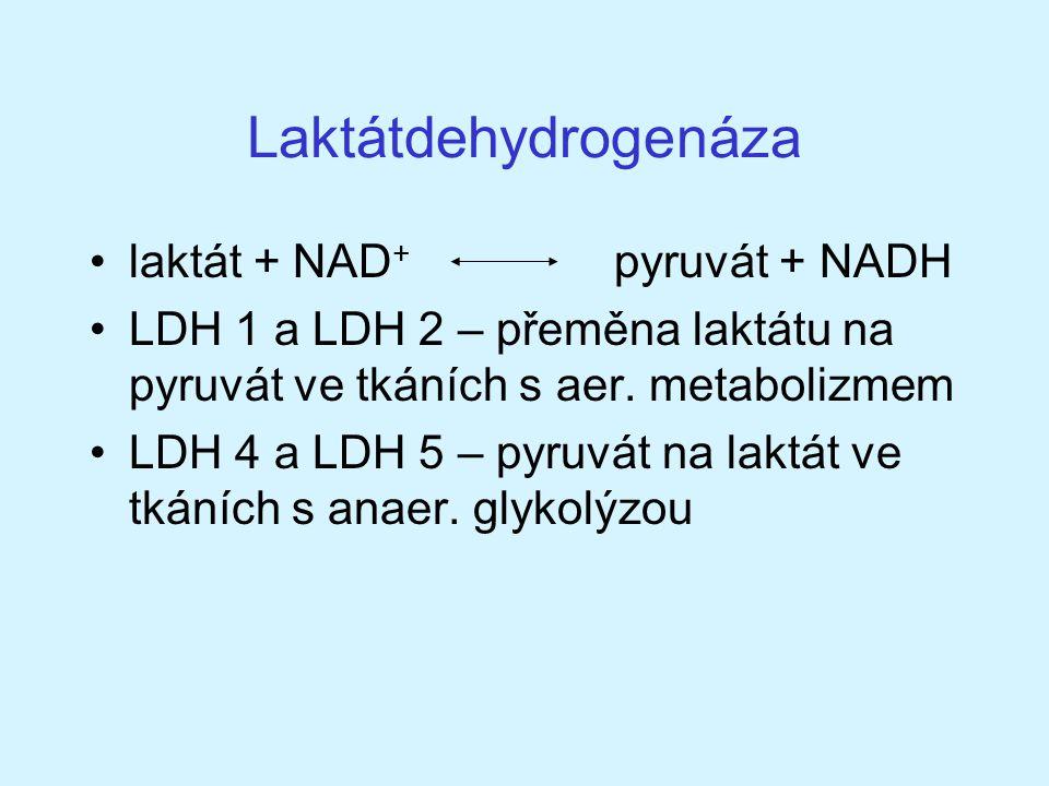 Laktátdehydrogenáza laktát + NAD+ pyruvát + NADH
