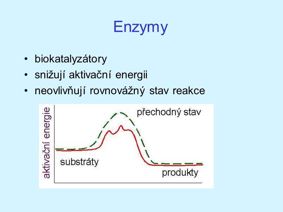 Enzymy biokatalyzátory snižují aktivační energii