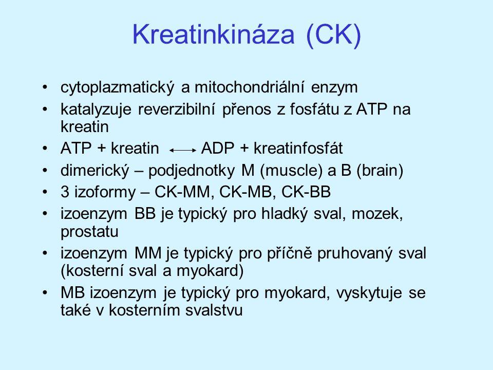 Kreatinkináza (CK) cytoplazmatický a mitochondriální enzym