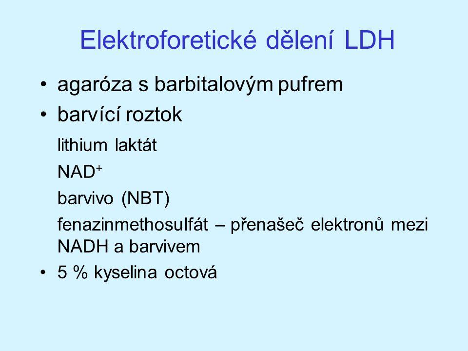 Elektroforetické dělení LDH