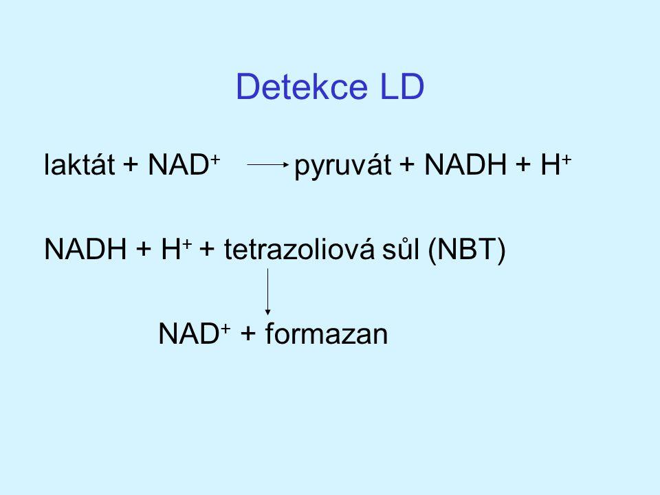Detekce LD laktát + NAD+ pyruvát + NADH + H+