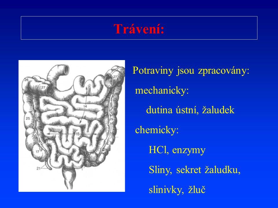 Trávení: Potraviny jsou zpracovány: mechanicky: dutina ústní, žaludek