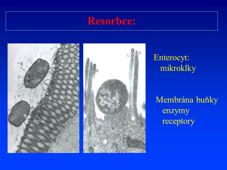Resorbce: Enterocyt: mikroklky Membrána buňky enzymy receptory