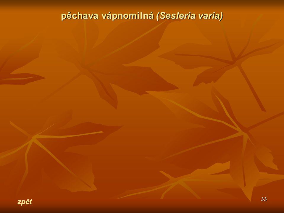 pěchava vápnomilná (Sesleria varia)