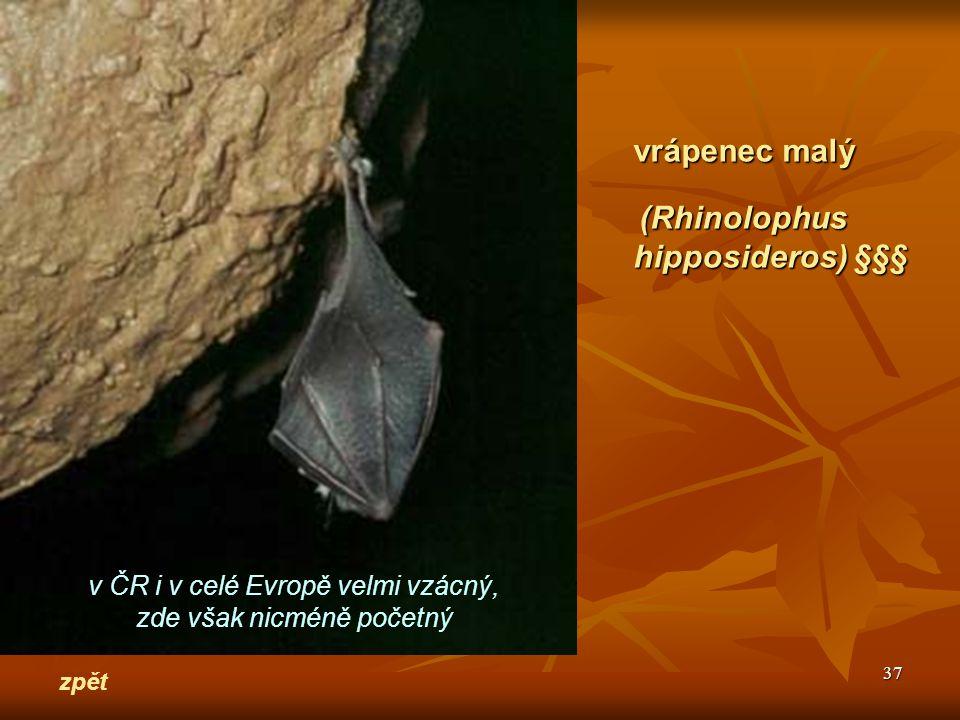 vrápenec malý hipposideros) §§§ v ČR i v celé Evropě velmi vzácný,
