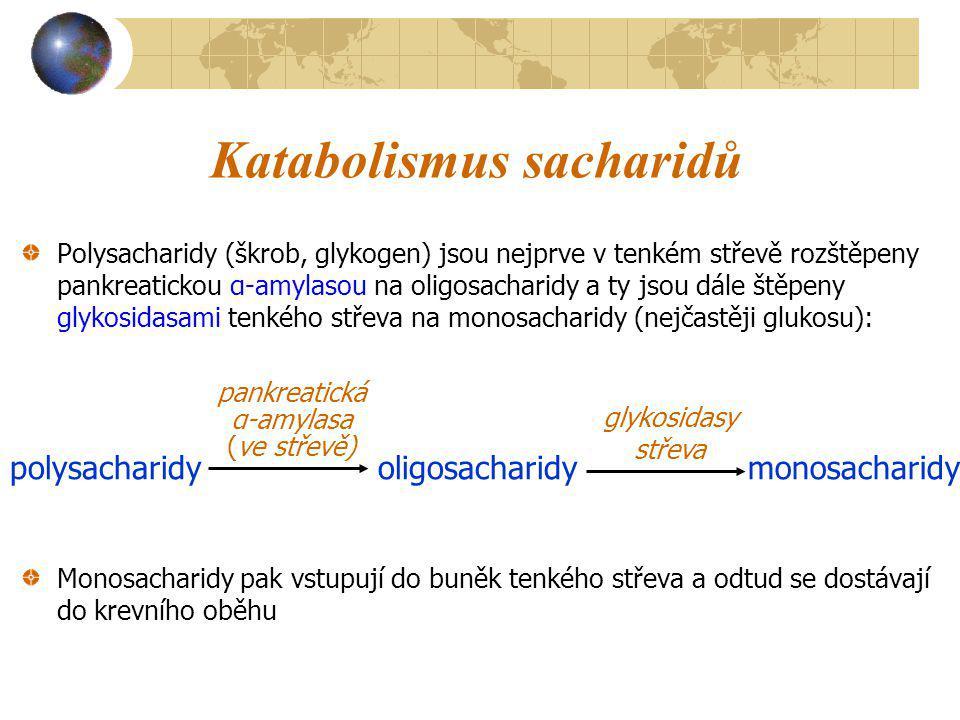 Katabolismus sacharidů