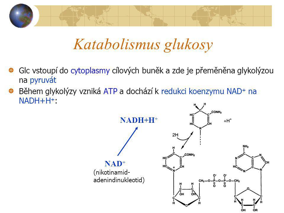 Katabolismus glukosy Glc vstoupí do cytoplasmy cílových buněk a zde je přeměněna glykolýzou na pyruvát.
