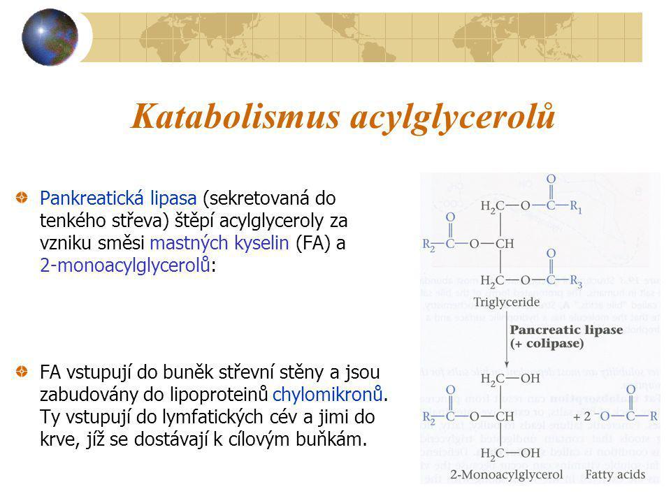 Katabolismus acylglycerolů