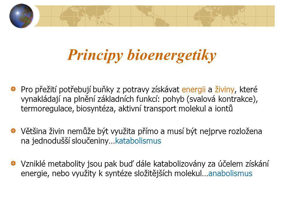 Principy bioenergetiky