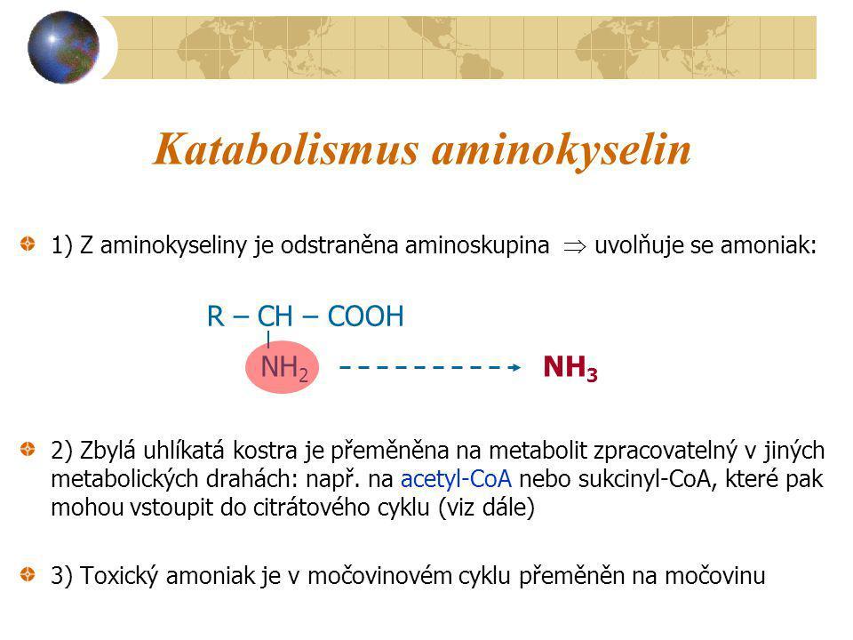 Katabolismus aminokyselin
