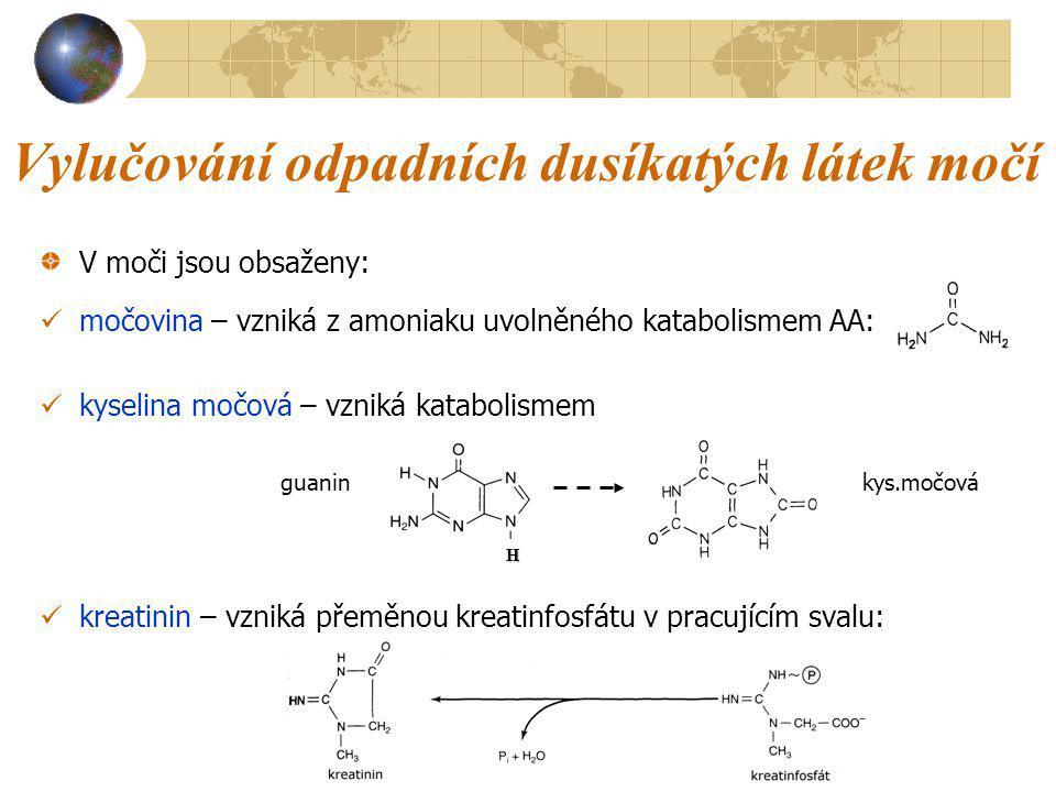 Vylučování odpadních dusíkatých látek močí