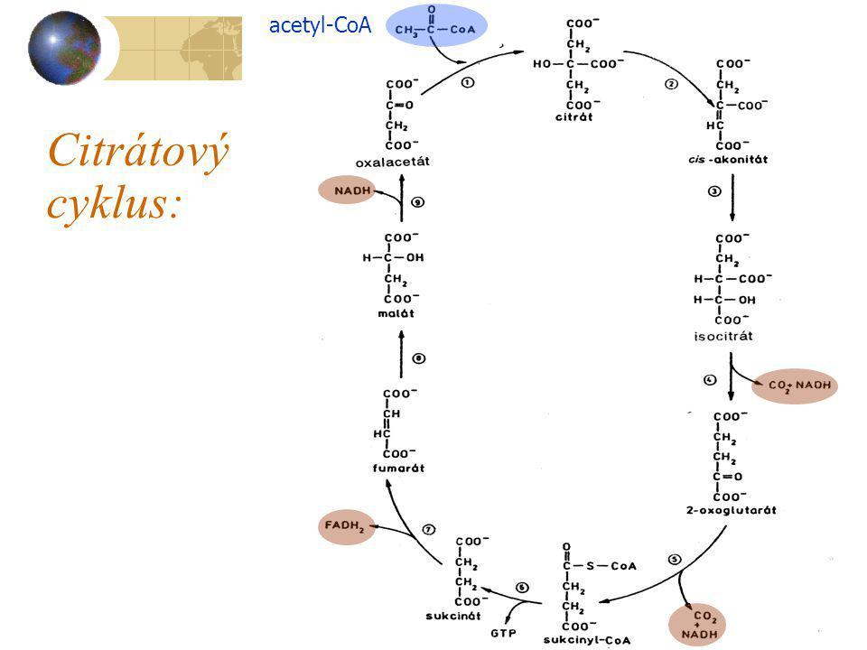 acetyl-CoA Citrátový cyklus: