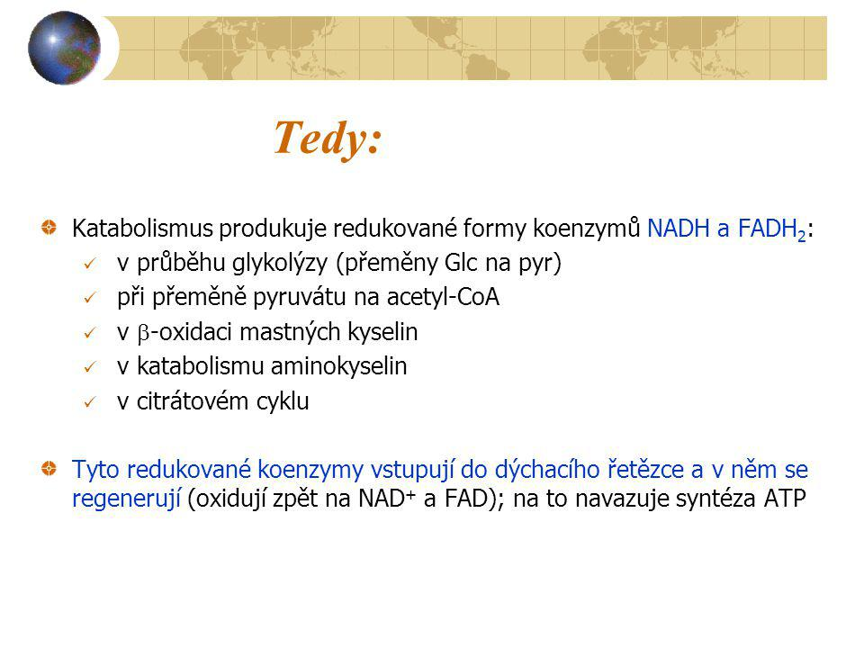 Tedy: Katabolismus produkuje redukované formy koenzymů NADH a FADH2: