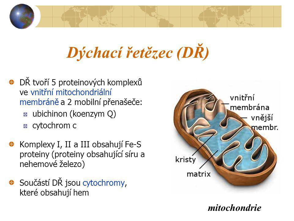 Dýchací řetězec (DŘ) mitochondrie