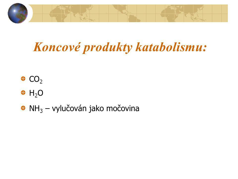 Koncové produkty katabolismu: