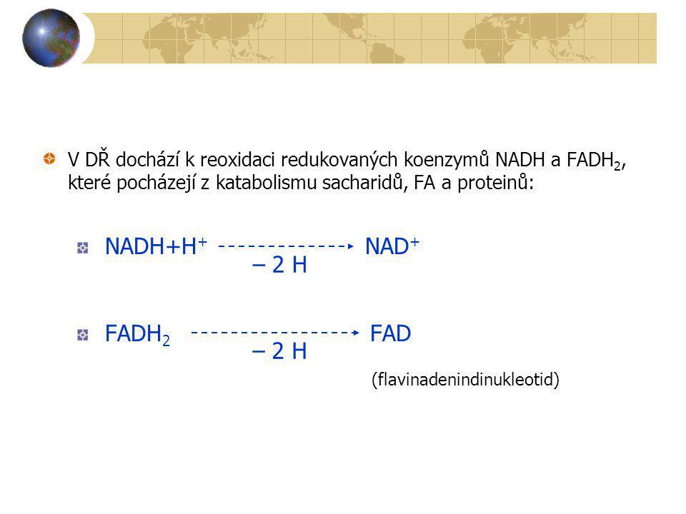 NADH+H+ NAD+ FADH2 FAD – 2 H – 2 H