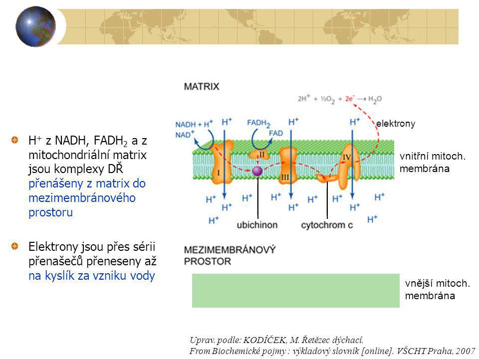 vnitřní mitoch. membrána. vnější mitoch. elektrony.