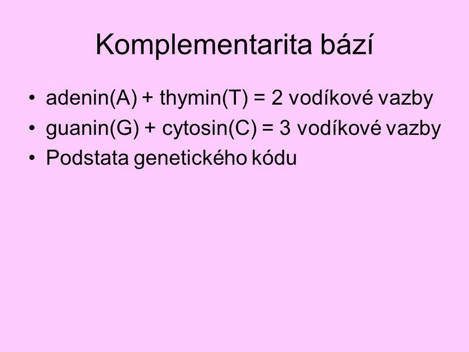 Komplementarita bází adenin(A) + thymin(T) = 2 vodíkové vazby