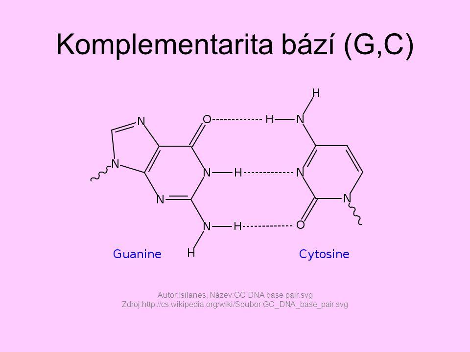 Komplementarita bází (G,C)