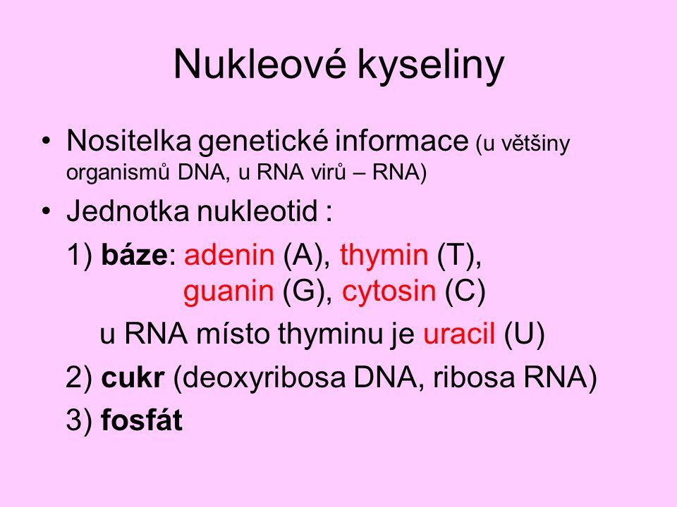 Nukleové kyseliny Nositelka genetické informace (u většiny organismů DNA, u RNA virů – RNA) Jednotka nukleotid :