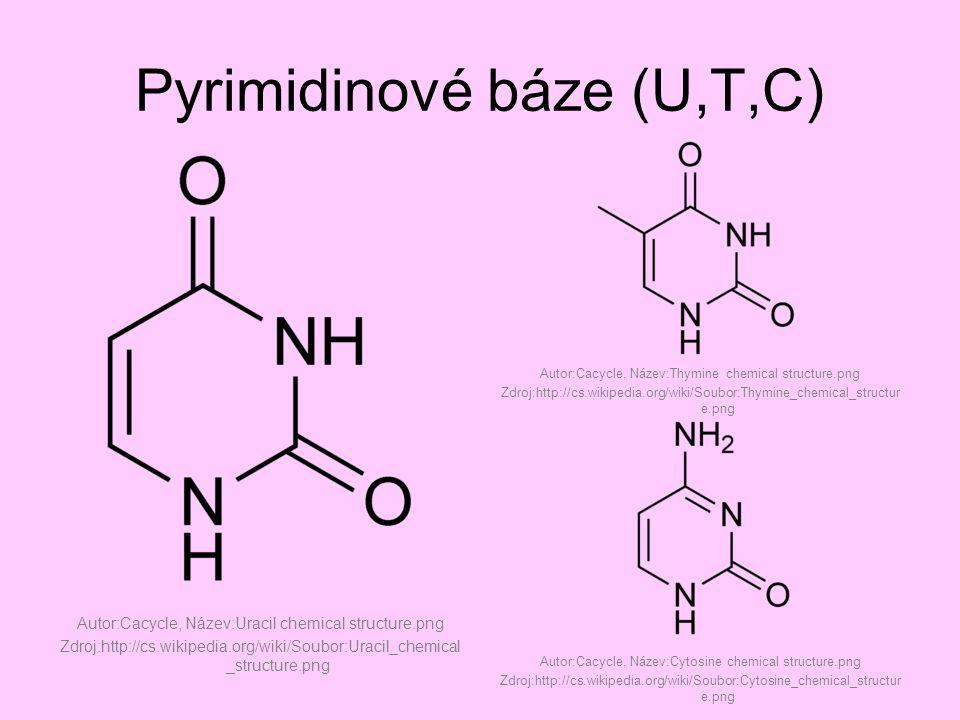 Pyrimidinové báze (U,T,C)