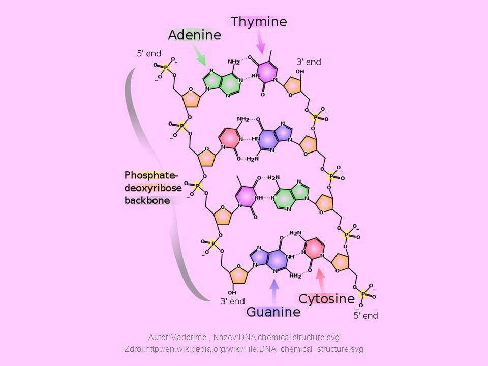 Autor:Madprime , Název:DNA chemical structure. svg Zdroj:http://en