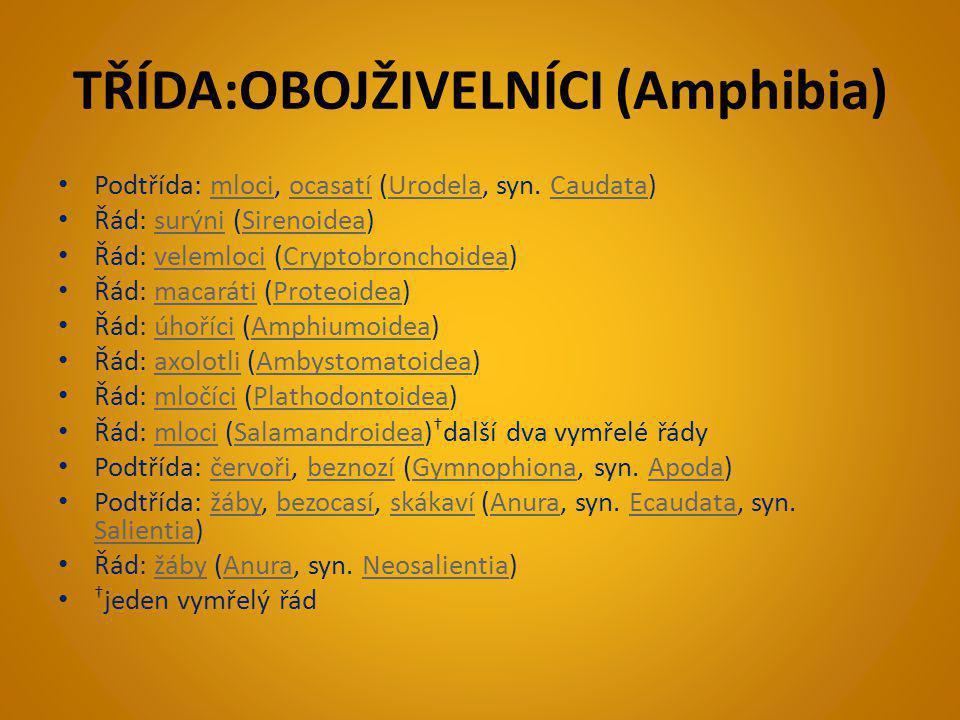 TŘÍDA:OBOJŽIVELNÍCI (Amphibia)