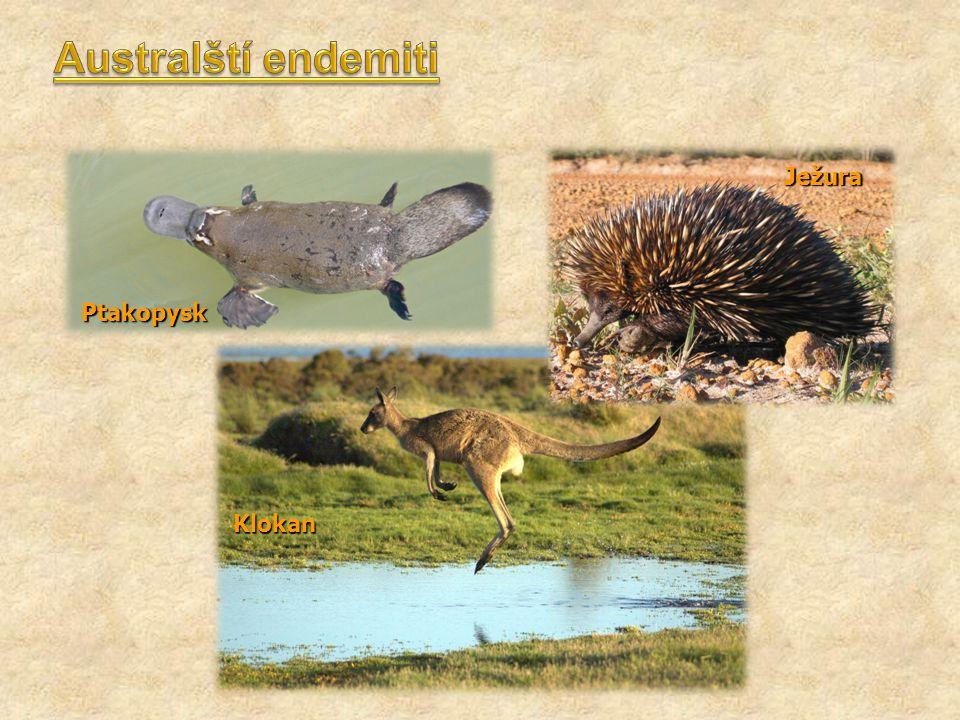 Australští endemiti Ježura Ptakopysk Klokan