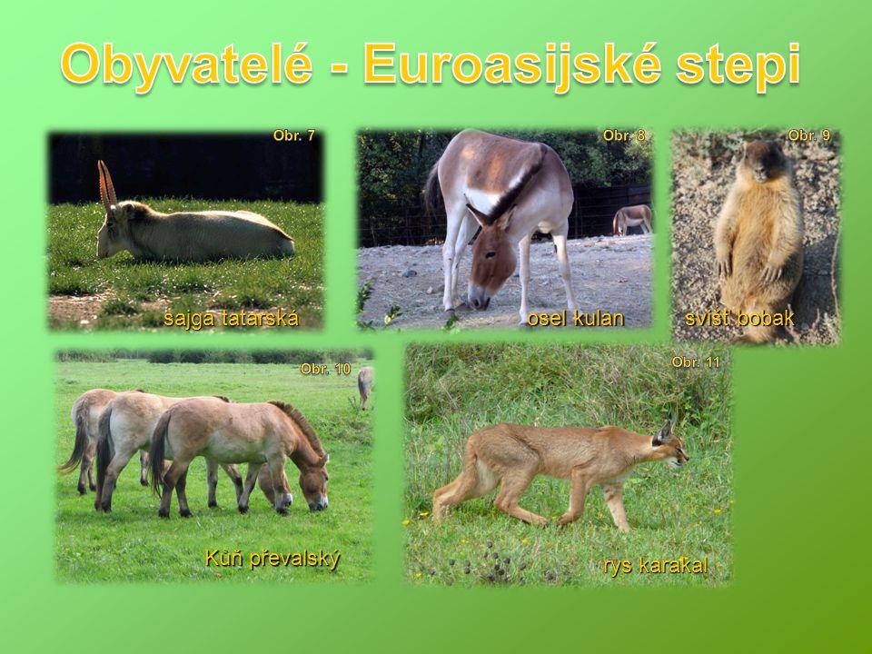 Obyvatelé - Euroasijské stepi