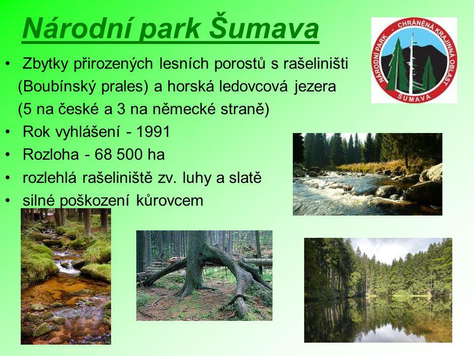 Národní park Šumava Zbytky přirozených lesních porostů s rašeliništi