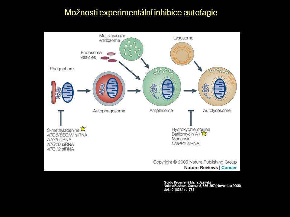 Možnosti experimentální inhibice autofagie