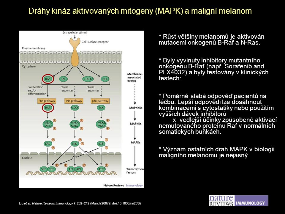 Dráhy kináz aktivovaných mitogeny (MAPK) a maligní melanom
