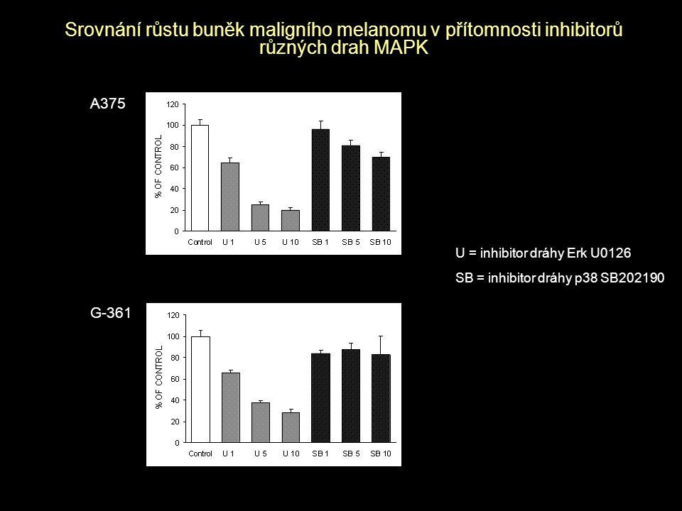 Srovnání růstu buněk maligního melanomu v přítomnosti inhibitorů různých drah MAPK