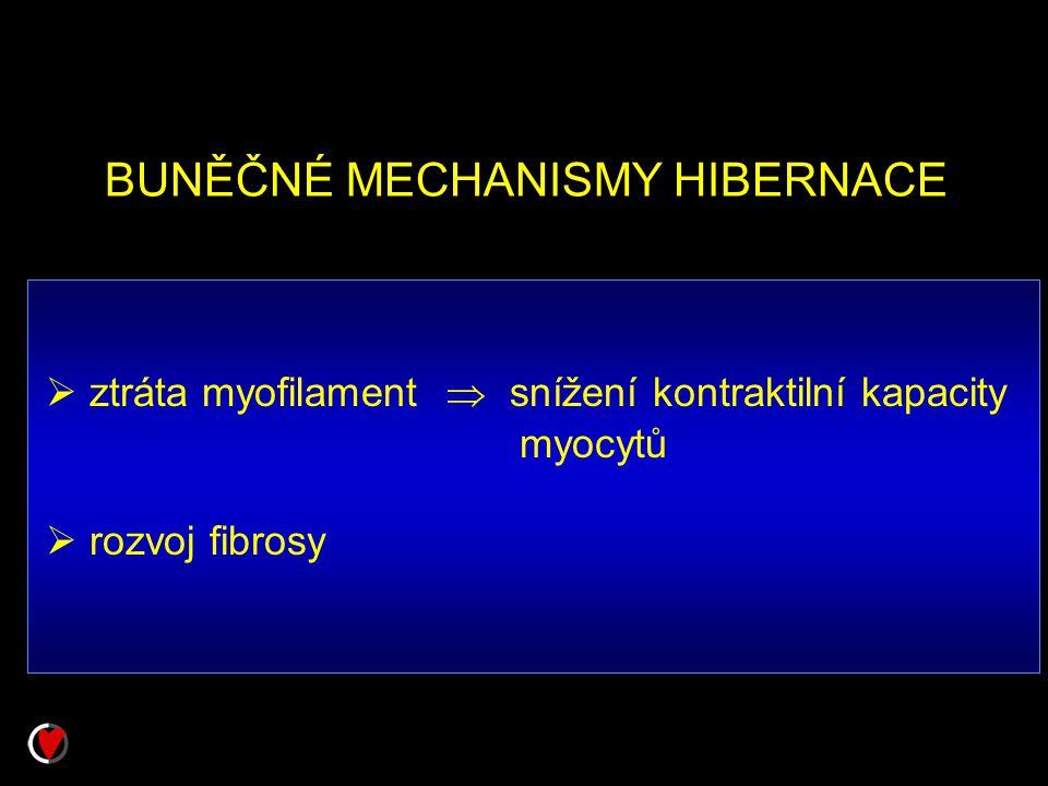 BUNĚČNÉ MECHANISMY HIBERNACE