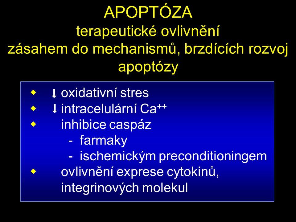 APOPTÓZA terapeutické ovlivnění zásahem do mechanismů, brzdících rozvoj apoptózy