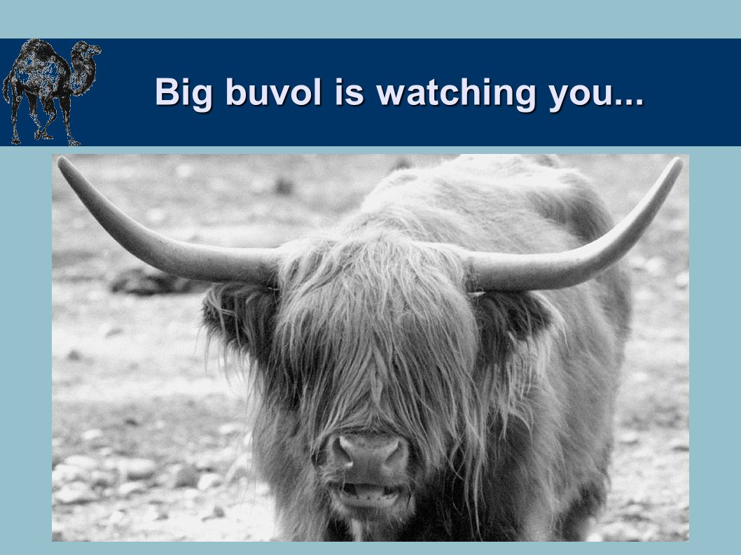 Big buvol is watching you...