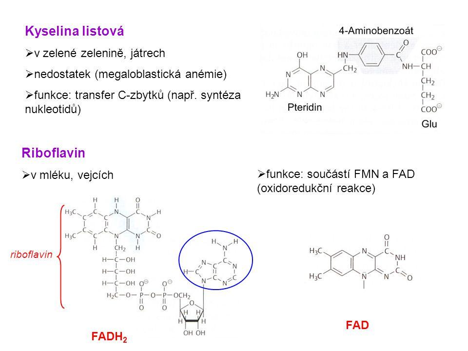 Kyselina listová Riboflavin v zelené zelenině, játrech