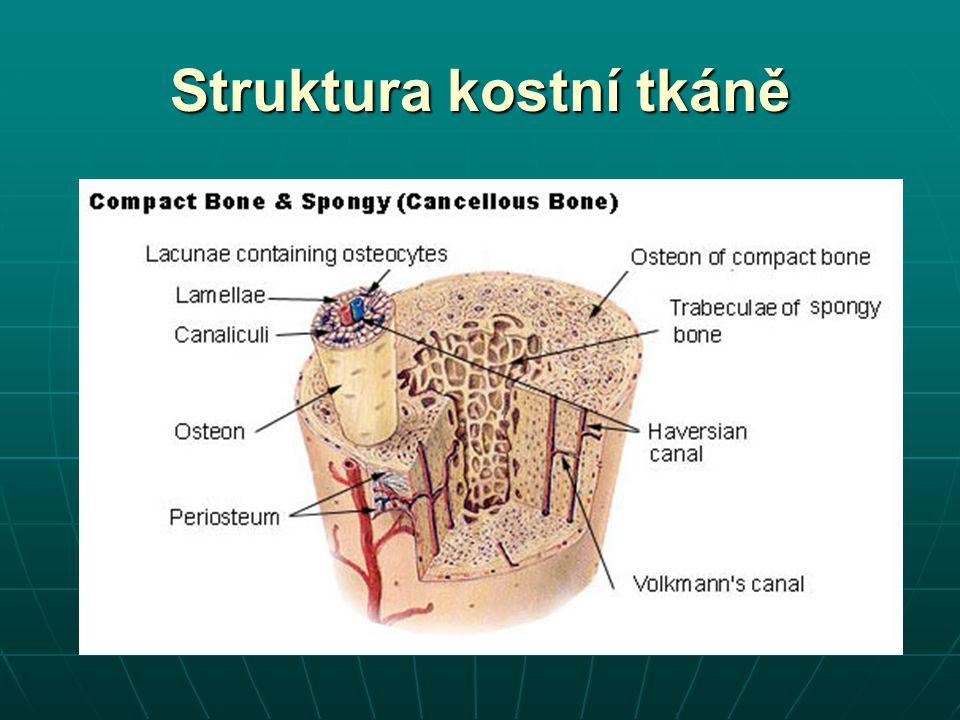 Struktura kostní tkáně