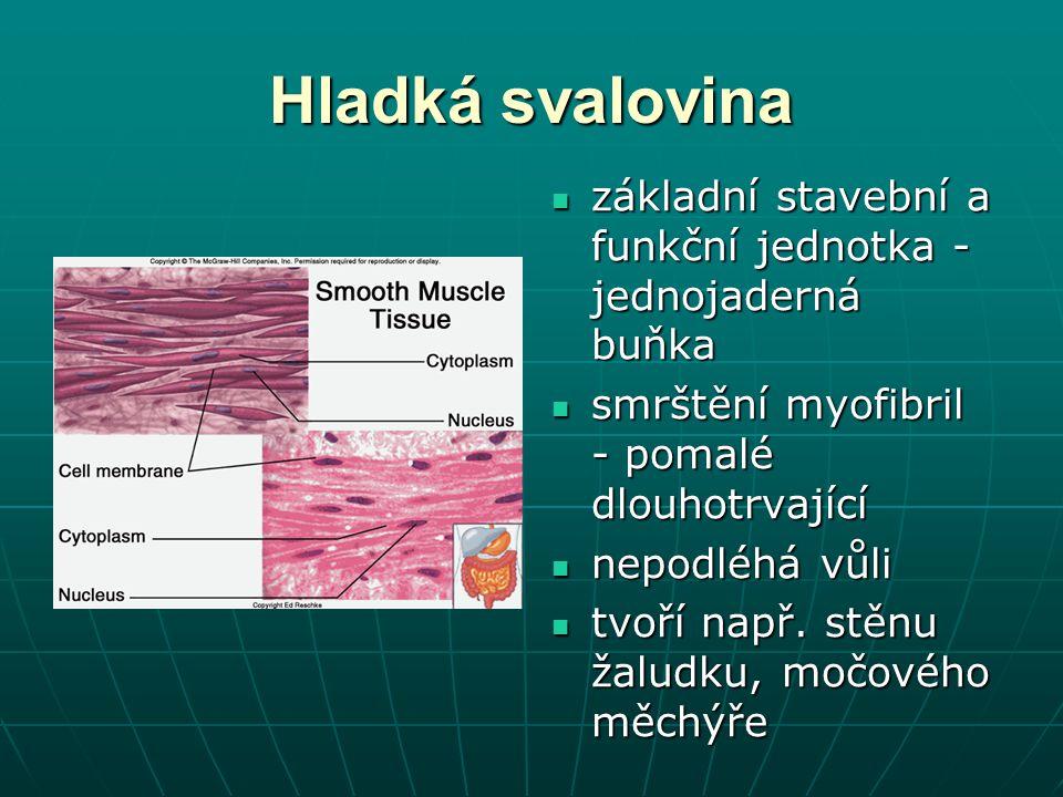Hladká svalovina základní stavební a funkční jednotka - jednojaderná buňka. smrštění myofibril - pomalé dlouhotrvající.