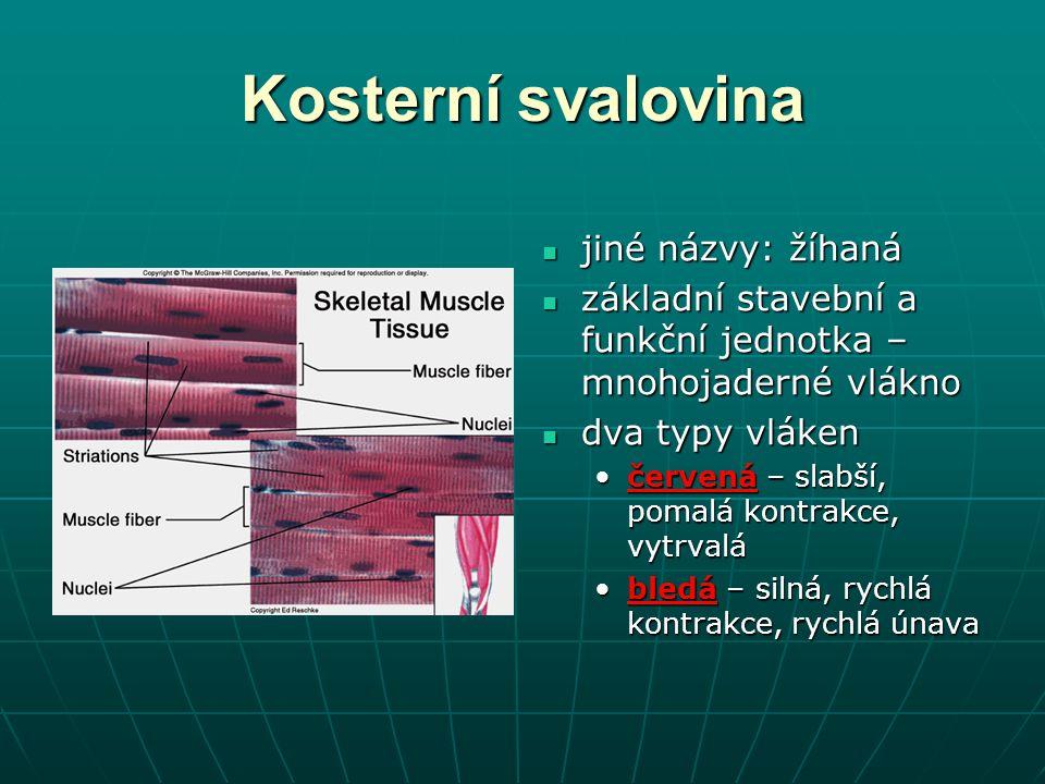 Kosterní svalovina jiné názvy: žíhaná
