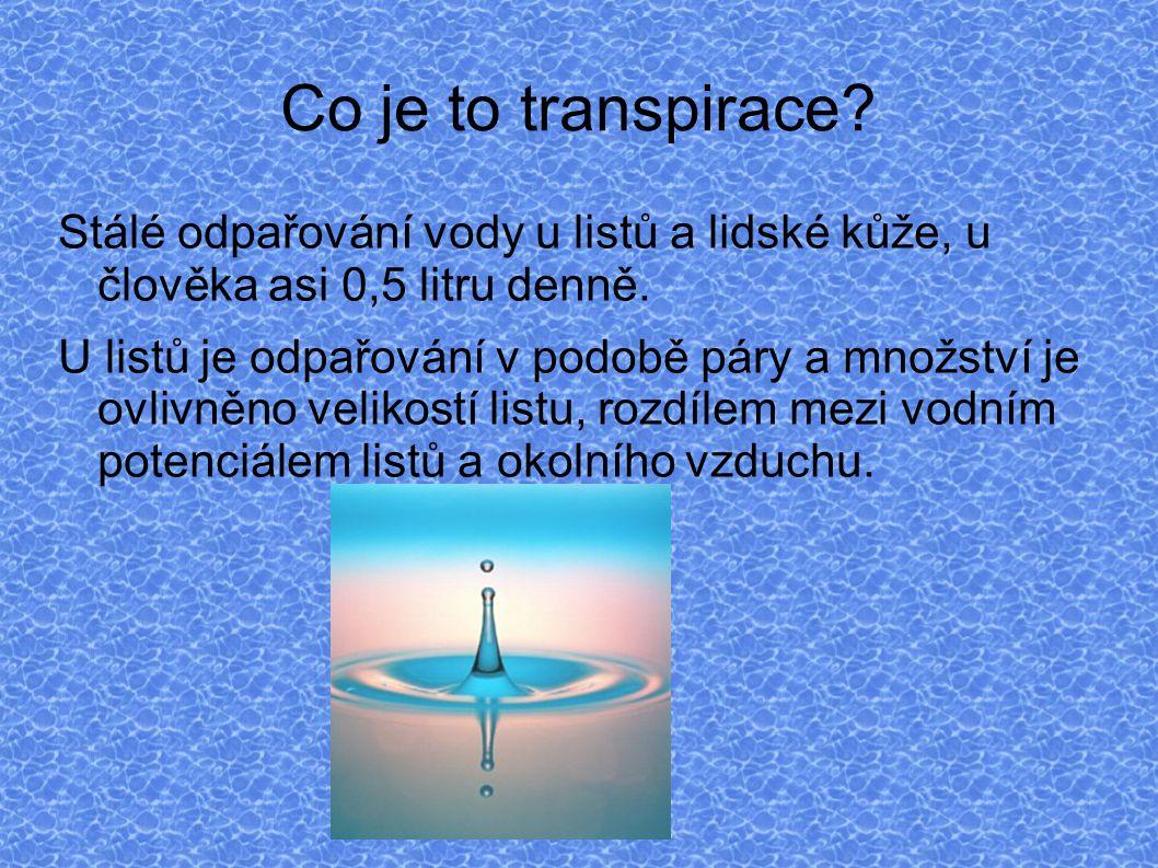 Co je to transpirace Stálé odpařování vody u listů a lidské kůže, u člověka asi 0,5 litru denně.
