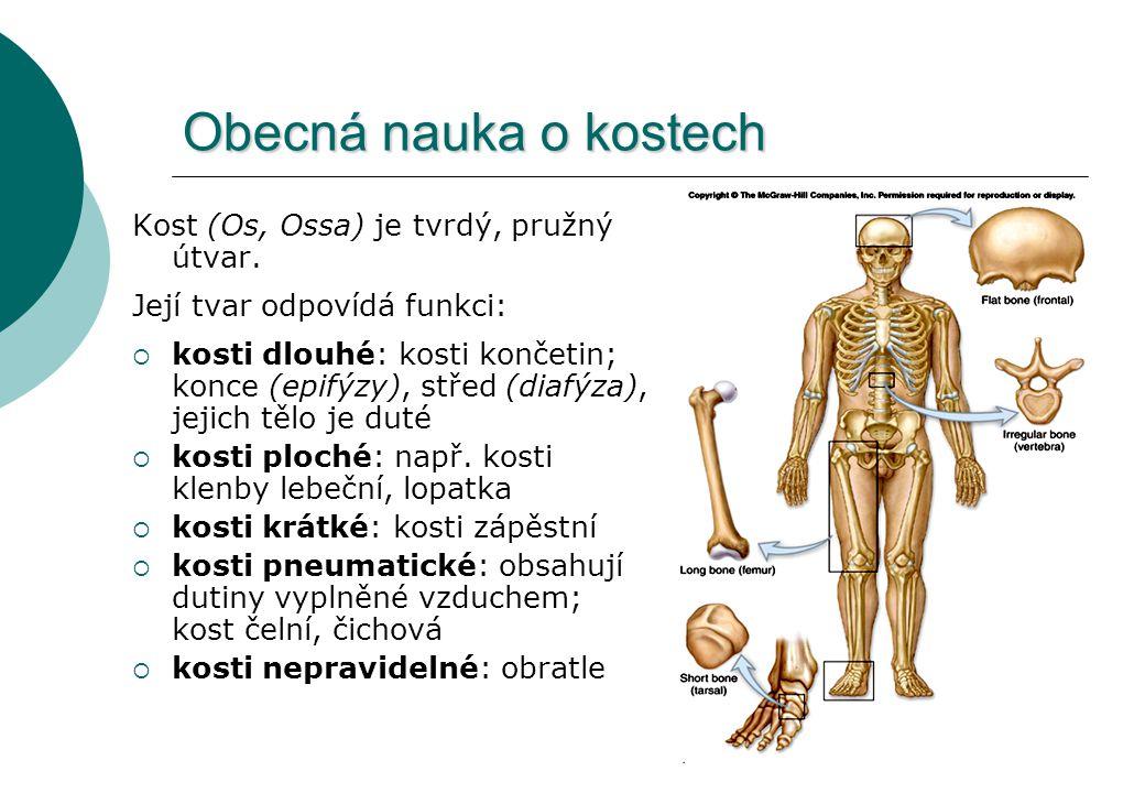 Obecná nauka o kostech Kost (Os, Ossa) je tvrdý, pružný útvar.