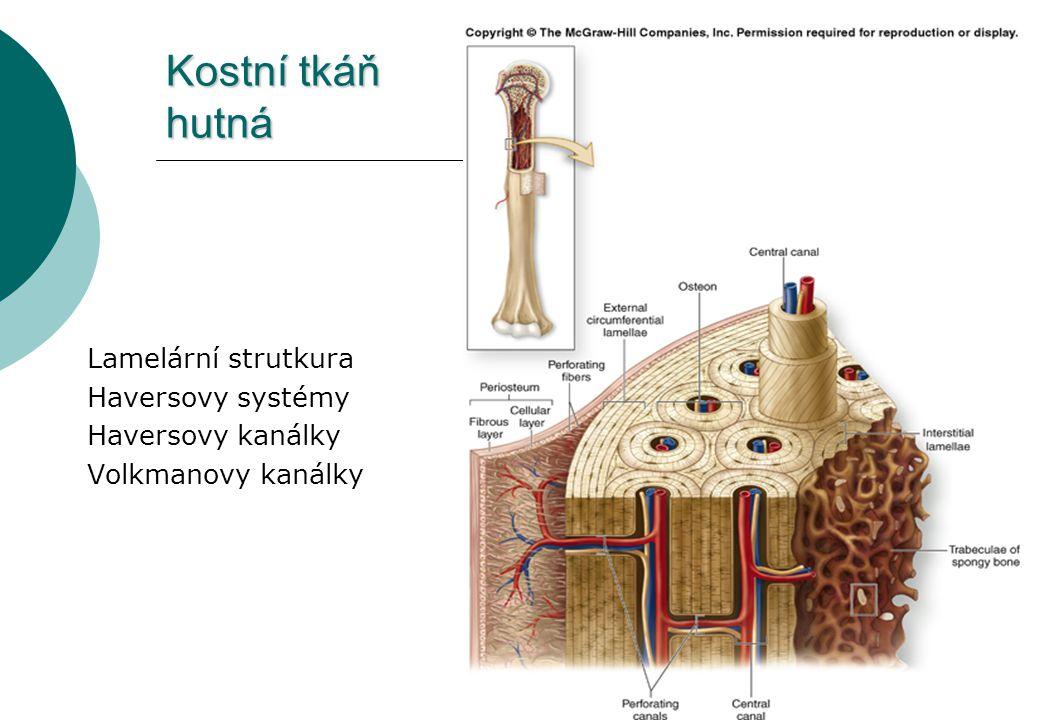Kostní tkáň hutná Lamelární strutkura Haversovy systémy