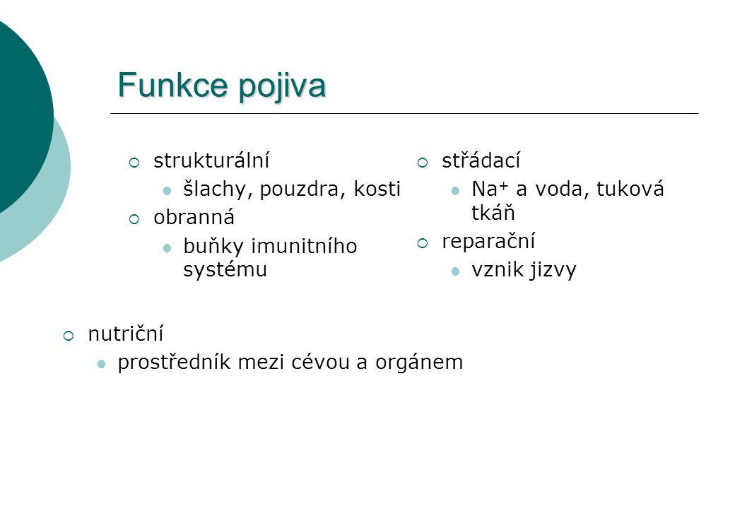 Funkce pojiva strukturální šlachy, pouzdra, kosti obranná